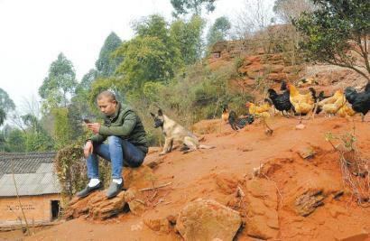 养鸡专业户吴勇智闲着时就给鸡拍照发微信,通过网络销售自己养的跑山鸡。